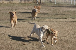 Photo by Katherine Schroeder courtesy of North Fork School for Dogs