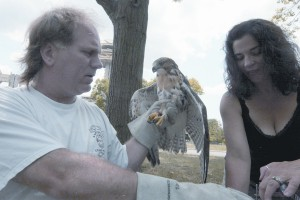 Bobby and Cathy Horvath, wildlife rescuers from North Massapequa, tending to a hawk.