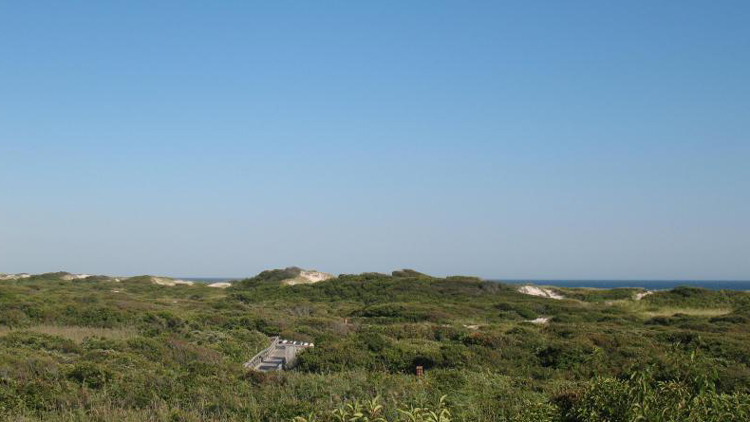 A nature trail winds through Watch Hill on Fire Island.