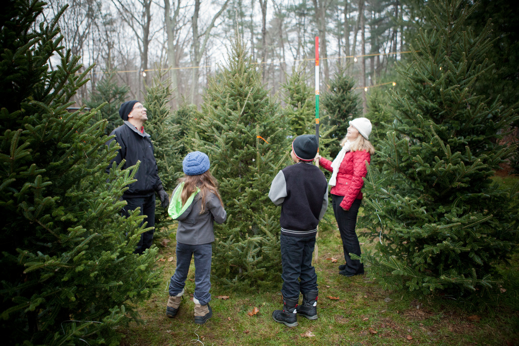 Chop Down Your Own Christmas Tree At These Long Island Farms