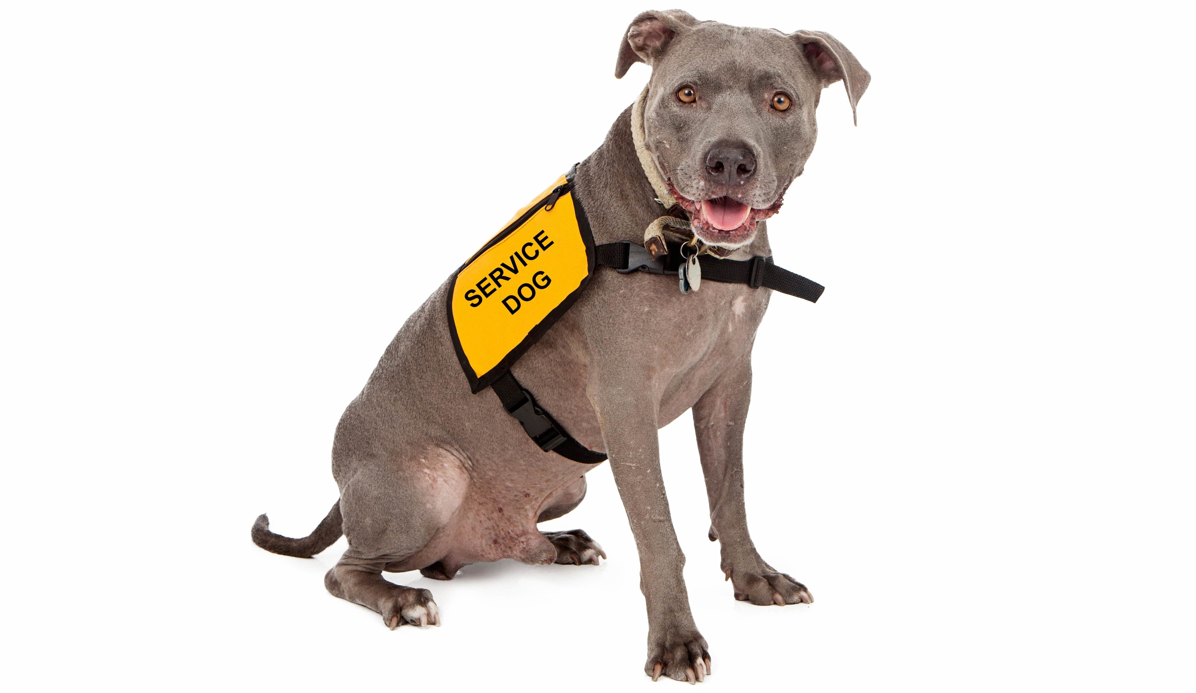 What Is The Difference Between A Service Dog Therapy Pet And Emotional Support Animal